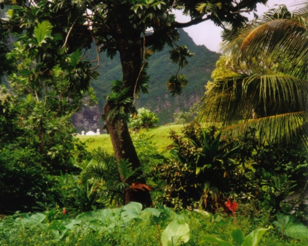 Costa Rica Rain Forest Tours