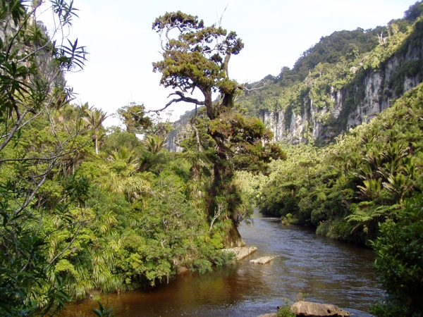 Dominica Rain Forest Tours