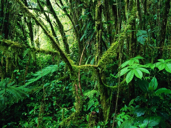 Panama Rain Forest Tours